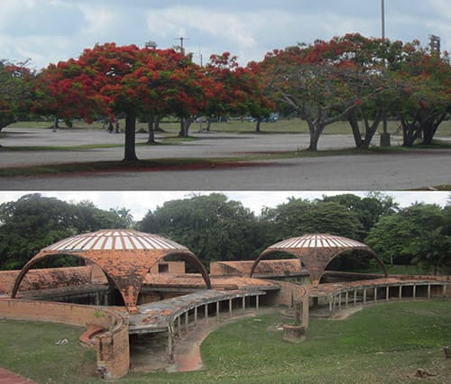 A beautiful country-club landscape in Havana inspired Fidel Castro and Che Gevara to create the National Schools of Art at that location, which was replete with Royal Poinciana trees (known also as Delonix Regia, Gulmohar Tree or Flamboyant Tree). These dome-like canopy trees inspired architect Vittorio Garatti to create the vaults in his National Ballet School. The trees and vaults of the school inspire this illustration of built creation that perfectly reflects and blends with its natural environment.